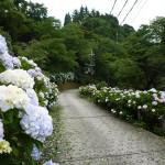 あじさいスポットあじさい祭り 奈良県