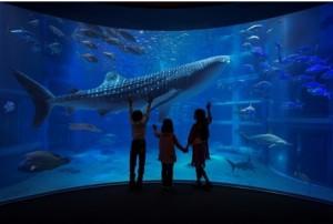 海遊館ジンベイザメ