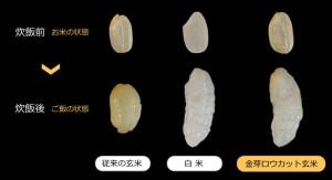 金芽ロウカット玄米1