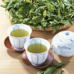 新茶 の季節。栄養丸ごと頂戴します!
