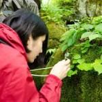 ルーペ持参で 苔観察 & 苔婚活 楽しむ人気の旅