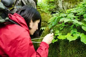 苔の観察1